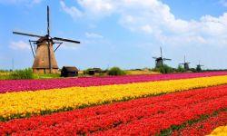 便宜荷兰VPS推荐,拥有Windows/Linux系统,支持支付宝购买