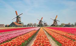 傲游主机荷兰VPS推荐 - Windows支持
